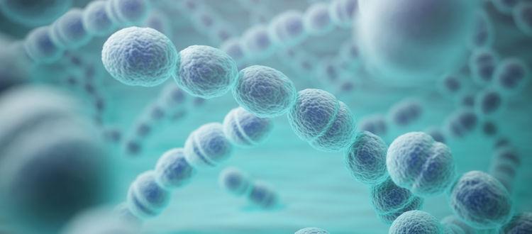 Streptokokken Bakterien